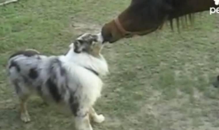 Βίντεο: Σκύλος και άλογο δίνουν φιλί διαρκείας!