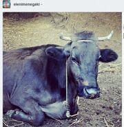 Ελένη Μενεγάκη: Δείτε τη φωτογραφία που πόσταρε στο twitter της!