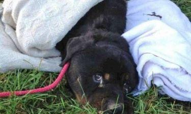 Τραγικό: Εγκατέλειψαν τον σκύλο τους γιατί είχε καρκίνο...