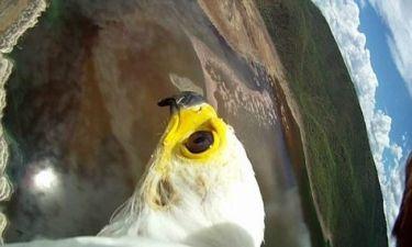 Πώς μας βλέπουν τα πουλιά από ψηλά (pics)