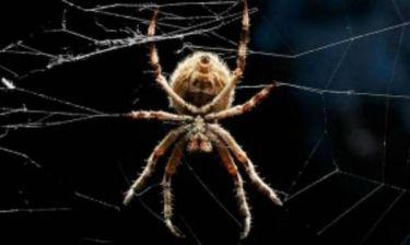 10 πράγματα που δεν ξέρετε για τις αράχνες!
