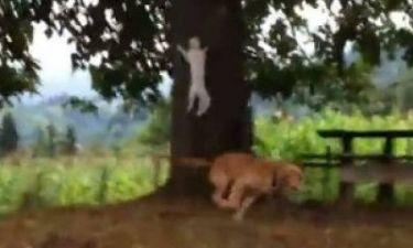 Βίντεο: Γάτα μεταμορφώνεται σε νίντζα!
