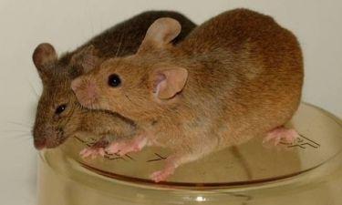 Ανέκδοτο:Ο Άγγλος ποντικός!
