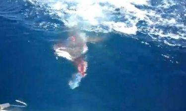 Βίντεο: Καλή... ψαριά για τον καρχαρία