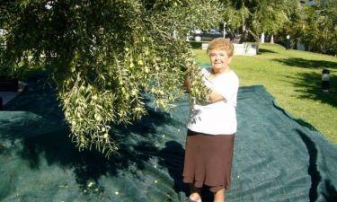 Βέφα Αλεξιάδου: Μάζεψε τις ελιές της με τις παντόφλες (φωτό)