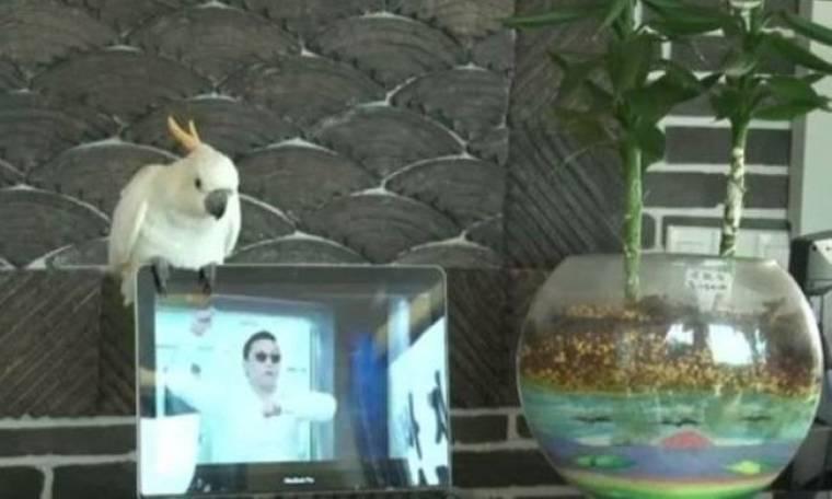 Βίντεο: Παπαγάλος τραγουδάει το «Gangnam Style»