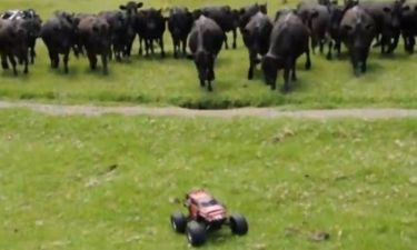 Βίντεο: Βενζινοκίνητο εναντίον Αγελάδων