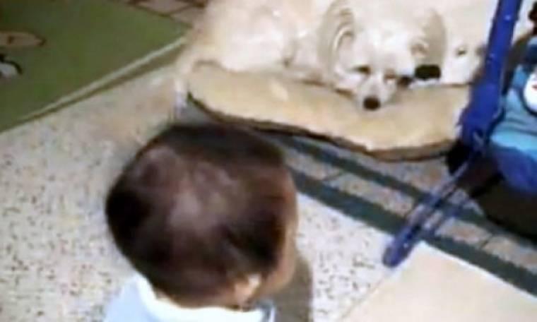 Η καθημερινότητα ενός σκύλου με ένα μωρό!