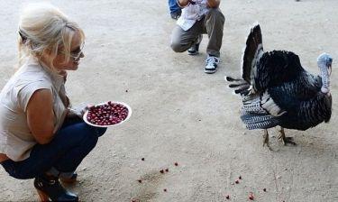 Η Pamela Anderson και οι γαλοπούλες