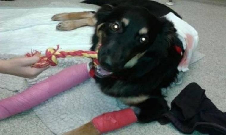 Η συγκλονιστική θυσία ενός σκύλου για να σώσει ένα 10χρονο αγοράκι!