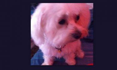 Σε ποια τραγουδίστρια ανήκει αυτό το σκυλάκι;