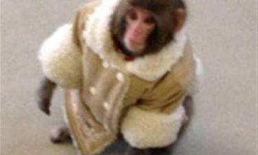 Απίστευτο: Μια... μαϊμού με μπουφάν έκανε βόλτες σε κατάστημα ΙΚΕΑ