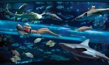 Βίντεο: Τσουλήθρα ανάμεσα από καρχαρίες