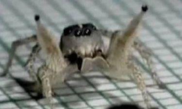 Βίντεο: Η αράχνη που χορεύει... ρούμπα ξετρέλανε το YouTube