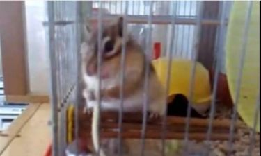Βίντεο: Δείτε το σκιουράκι – μακαρονά!