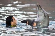 Ο Φαλκάο και το… δελφίνι