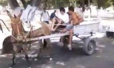 Δείτε το γάιδαρο που είναι «άσος» στο παρκάρισμα! (video)