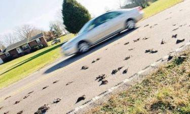 Τενεσί: Πουλιά έπεσαν νεκρά από τον ουρανό!