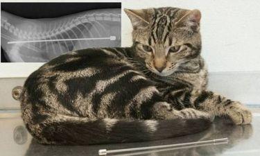 Απίστευτο: Δείτε τι βρήκαν στο στομάχι αυτής της γάτας!