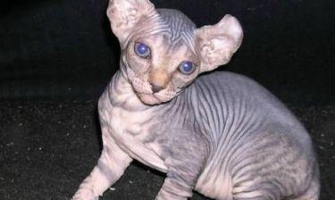 Όχι αυτή η γάτα δεν είναι εξωγήινη! (pics)