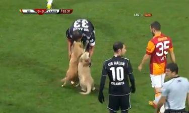 Δυο λαμπραντόρ διέκοψαν τον αγώνα της Galatasaray