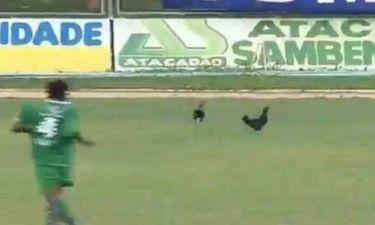 Βραζιλία: Κότες εισέβαλαν στο Σάο Μπενέντιτο - Ικάσα! (video)