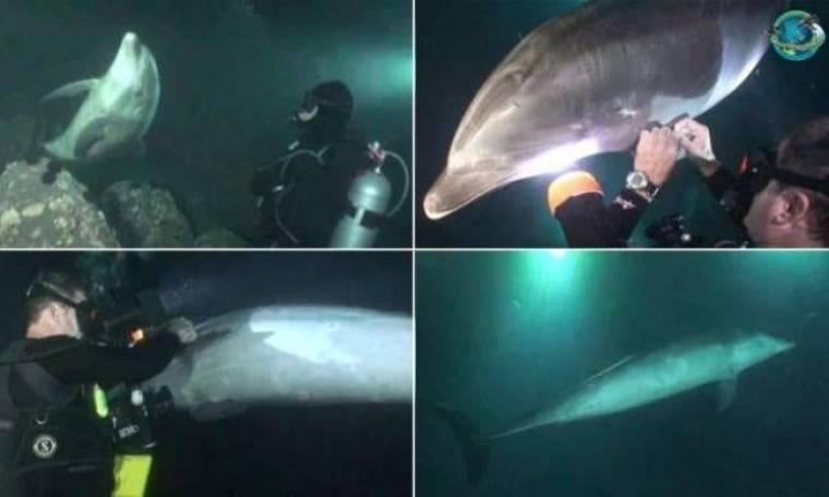 Βίντεο: Η συγκλονιστική στιγμή που δελφίνι ζητά βοήθεια από δύτες