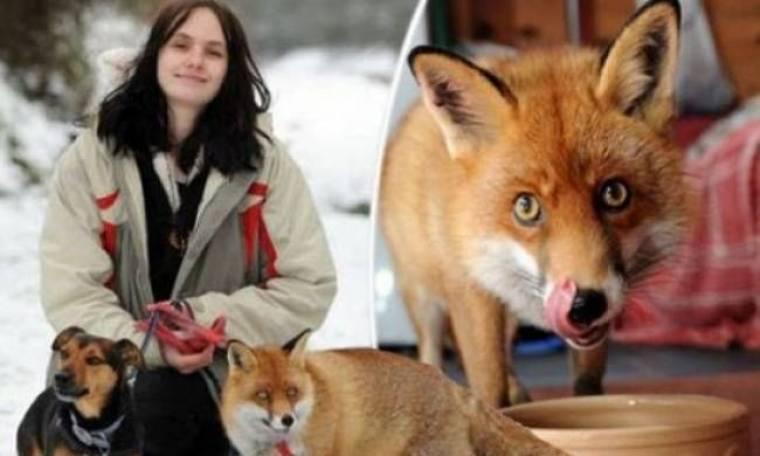 Διαβάστε τη συγκινητική ιστορία της αλεπούς που ζει σαν σκύλος!