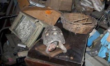 Χελώνα επιβίωσε 30 χρόνια ξεχασμένη σε αποθήκη!