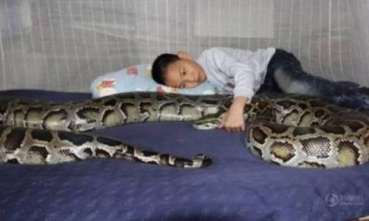 Tο μικρό αγόρι που κοιμάται αγκαλιά με έναν πύθωνα!