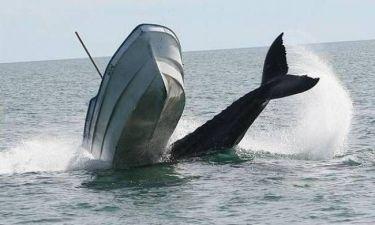 Απίστευτες φωτογραφίες: Φάλαινα βουλιάζει ένα ψαροκάικο (pics)