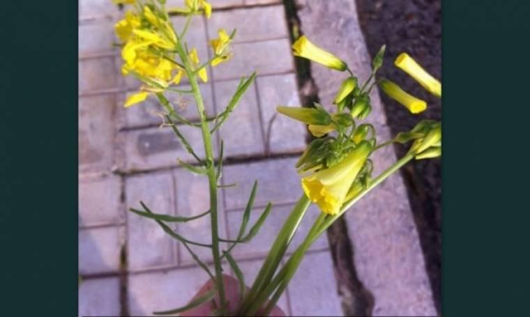 Ποια παρουσιάστρια έκανε έκπληξη στη μαμά της μια ανθοδέσμη με λουλούδια που έκοψε η ίδια;