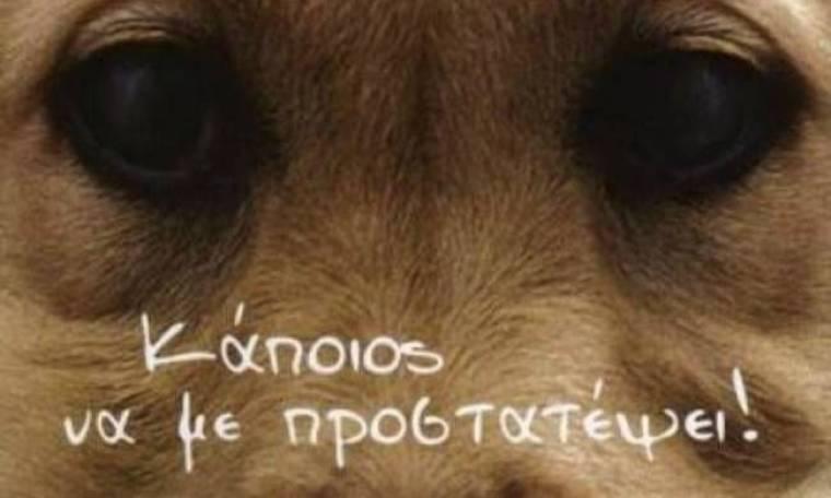 Σώθηκε ο σκύλος που πυροβόλησαν με 50 σφαίρες