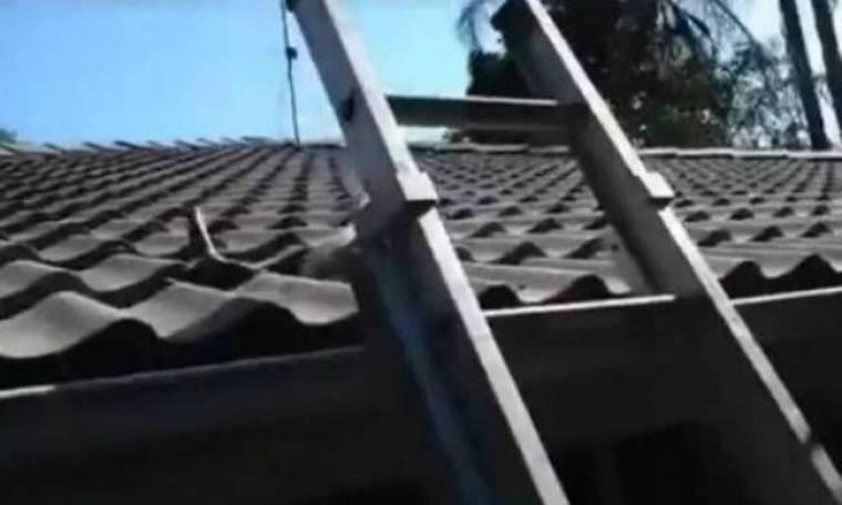 Βίντεο: Απίστευτο τι βγήκε από τη στέγη!