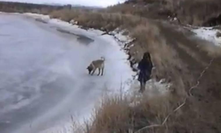 Bίντεο: Δείτε τι τρόμαξε αυτόν τον σκύλο!