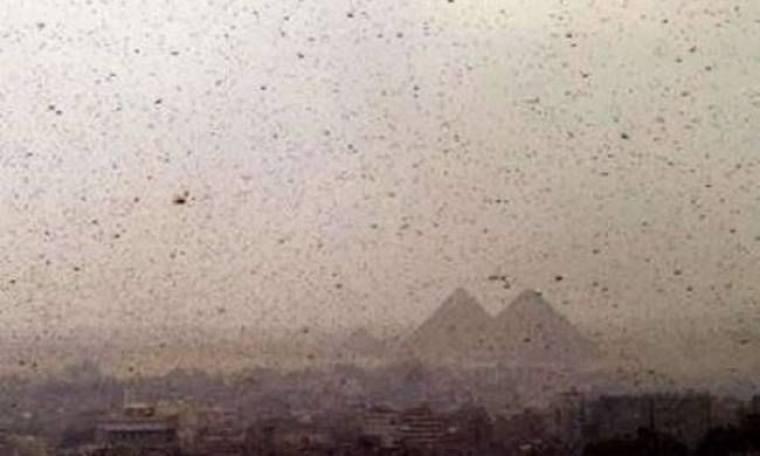Βίντεο-ΣΟΚ: Επιδρομή εκατομμυρίων ακρίδων στην Αίγυπτο