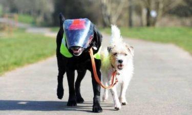 Μάθημα ζωής από σκύλους! (photos)