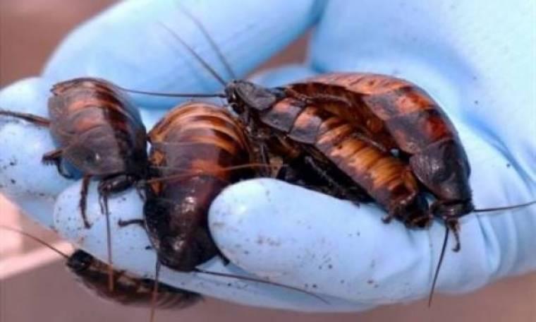 Οι κατσαρίδες θα επιβιώσουν μιας πυρηνικής καταστροφής;
