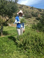 Eλένη Μενεγάκη: Δείτε την με ροζ καπέλο να μαζεύει… χόρτα!