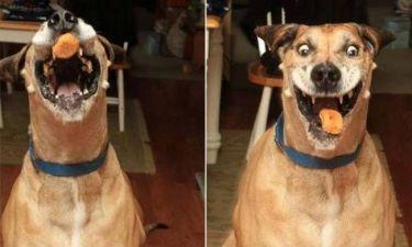 Η απίστευτη φάτσα σκύλου την ώρα που τρώει κοτομπουκιές! (pics)