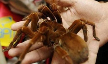 Η μεγαλύτερη αράχνη στον κόσμο!