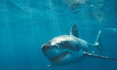 Κι όμως: Οι καρχαρίες καταδύονται για να...