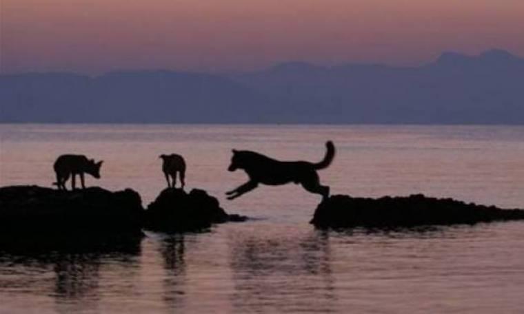 Αδέσποτοι σκύλοι έσωσαν τουρίστα από πνιγμό