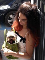 Γνωστή Ελληνίδα τραγουδίστρια έβαλε τον σκύλο της μέσα στη τσάντα!