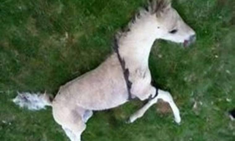 ΣΟΚ: Άλογο κατακρεουργήθηκε από σατανιστές