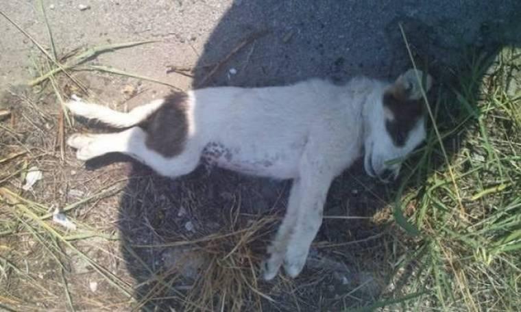 Κτήνος κακοποίησε μέχρι θανάτου κουταβάκια δύο μηνών!