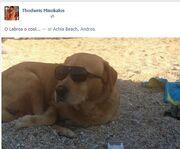 Η νέα φωτογραφία που πόσταρε ο αδερφός της Μενεγάκη στο facebook!