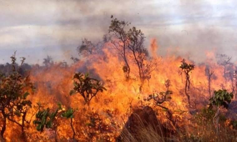 Πυρκαγιά στην περιοχή Ρουπακιά Αχαΐας