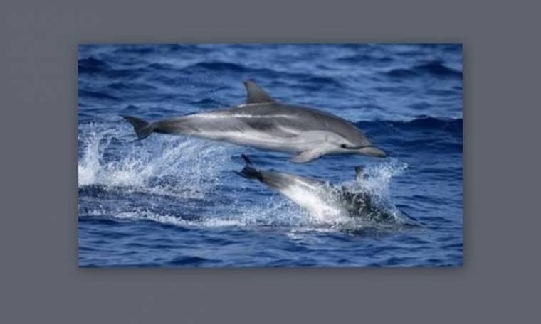 Η μνήμη των δελφινιών έχει ξεπεράσει τις προσδοκίες των επιστημόνων