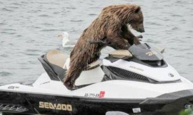Αρκούδα κάνει τζετ σκι!